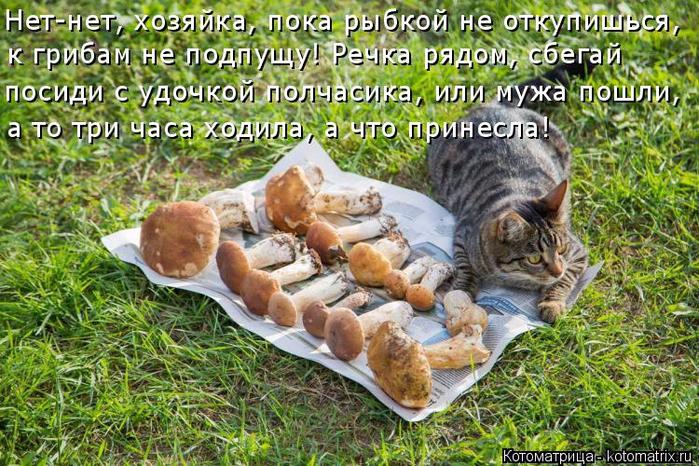 kotomatritsa_OZ (700x466, 518Kb)