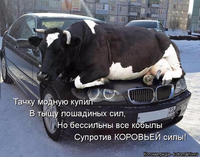 kotomatritsa_Q (1) (700x550, 346Kb)