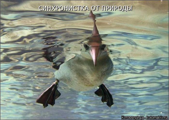 kotomatritsa_q8 (700x499, 350Kb)