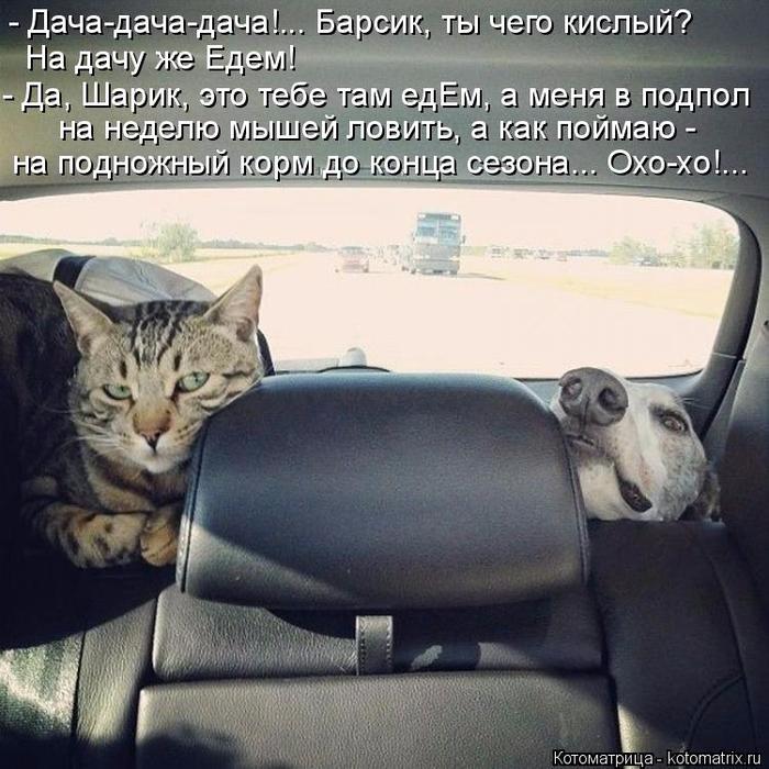 kotomatritsa_xg (700x700, 432Kb)