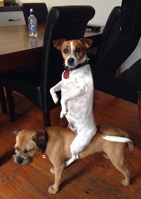 смешные фото собак 12 (497x700, 326Kb)