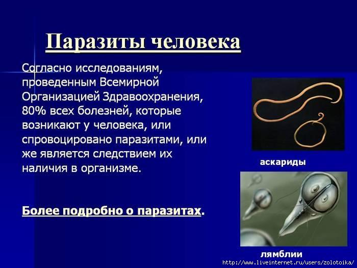 6086267_0013013Parazitycheloveka (700x525, 156Kb)
