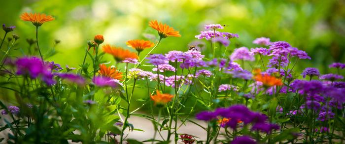 polevye-cvety (700x293, 111Kb)