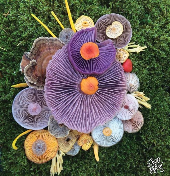 ленд арт фото грибов 5 (677x700, 638Kb)