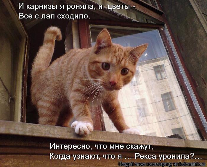 kotomatritsa_1 (700x563, 427Kb)