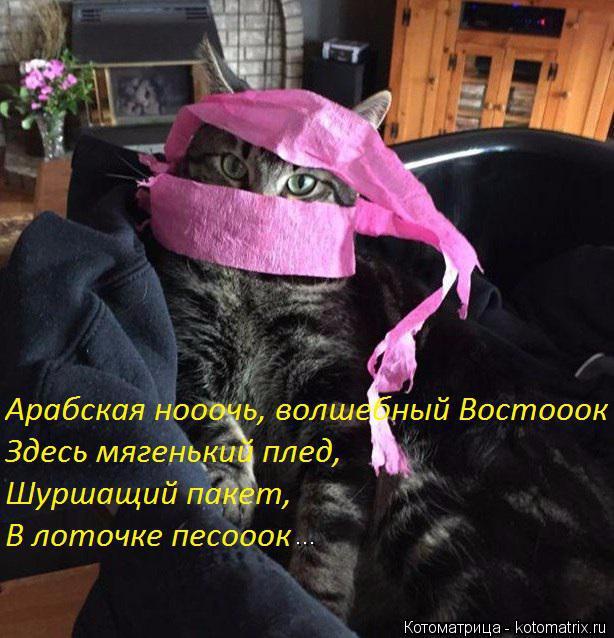 kotomatritsa_5 (614x638, 331Kb)