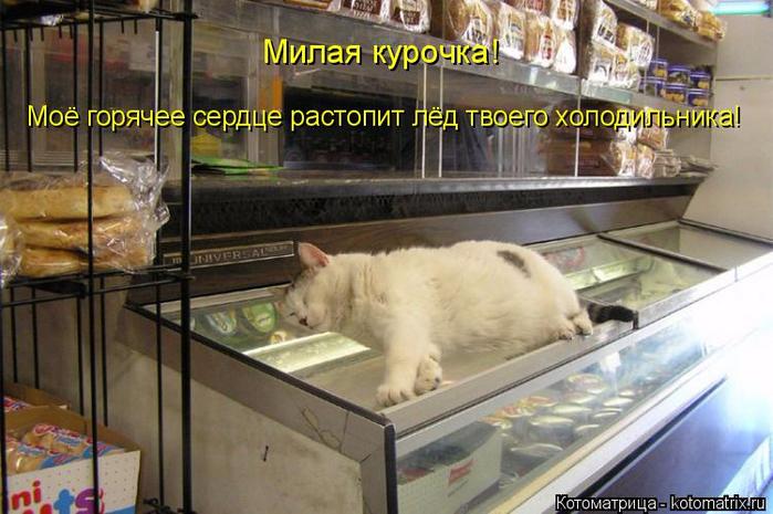 kotomatritsa_C (700x465, 364Kb)