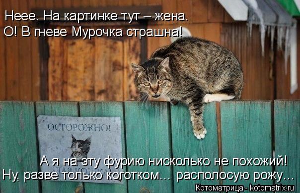 kotomatritsa_h (604x390, 257Kb)