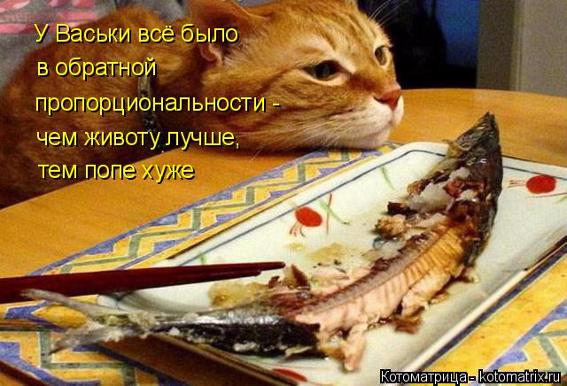 kotomatritsa_N (640x436, 314Kb)