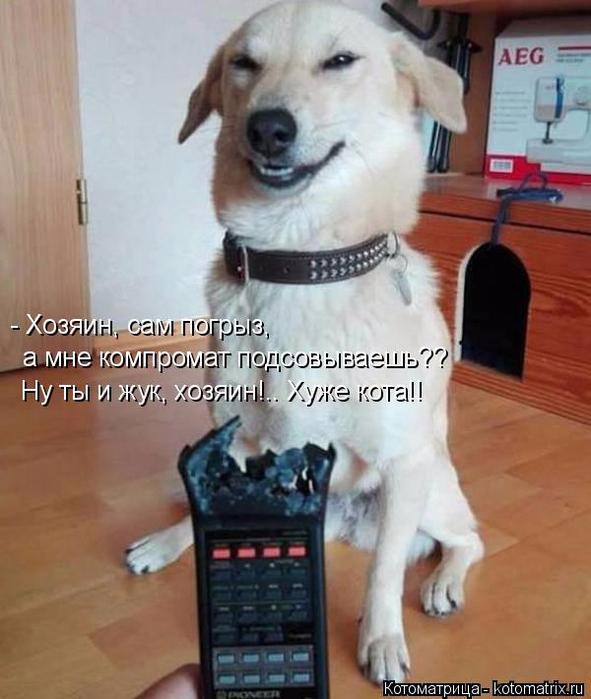 kotomatritsa_O (591x700, 329Kb)