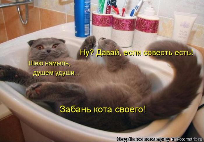 kotomatritsa_Qi (700x488, 329Kb)