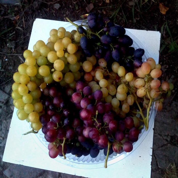 лучшие сорта винограда/683232_vinograd2017 (700x700, 456Kb)