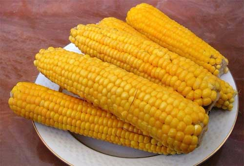 kukuruza (500x341, 134Kb)