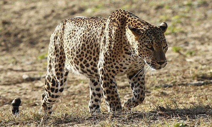 Лучшие фотографии животных за неделю из разных уголков мира!
