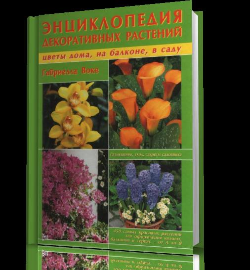 Бобовое зернышко русская народная сказка читать с картинками