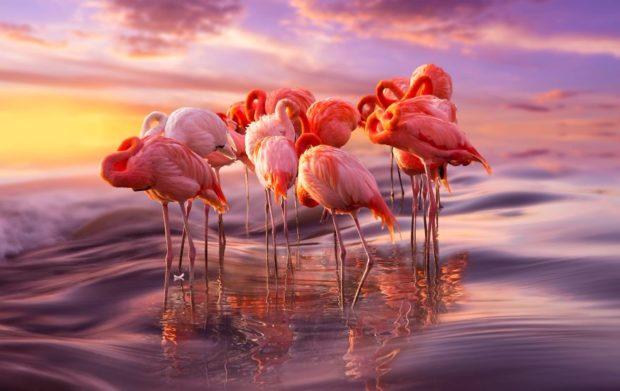 Прекрасные фламинго — одни из самых древних птиц