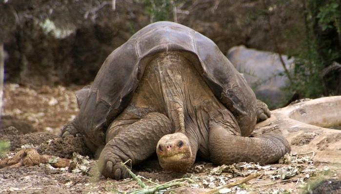 Какое животное живет дольше всех?