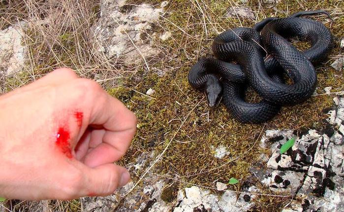 Какие змеи самые ядовитые?