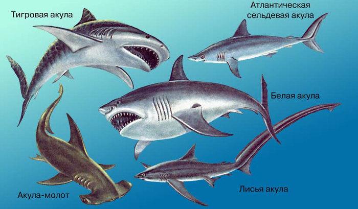 Едят ли акулы людей, на самом деле?