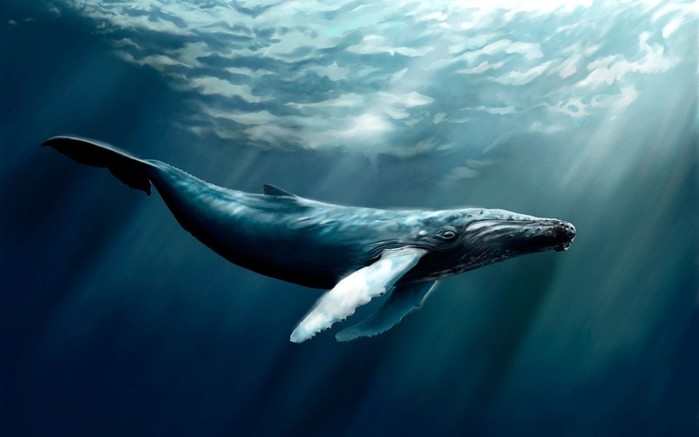 Почему у китов бьет фонтан из головы?