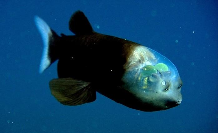 Как рыба дышит под водой?