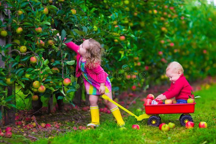 дети-выбирая-яб-око-на-ферме-55567033 (700x467, 97Kb)