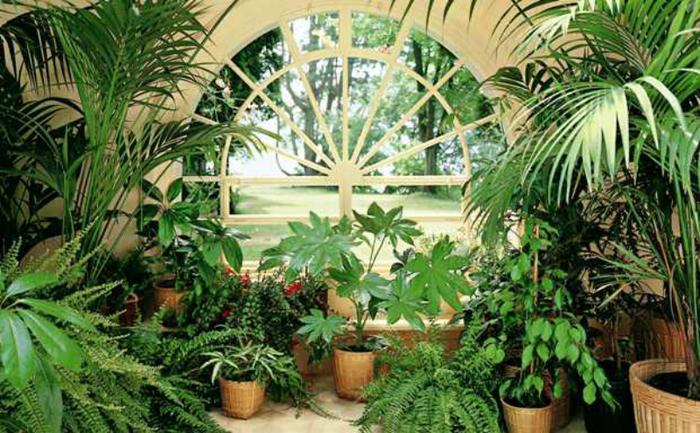 """alt=""""Комнатные растения в вашем доме""""/2835299_Komnatnie_rasteniya_v_vashem_dome1_1_ (700x433, 430Kb)"""
