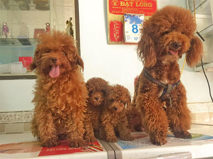 смешные собаки фото 1 (700x525, 275Kb)
