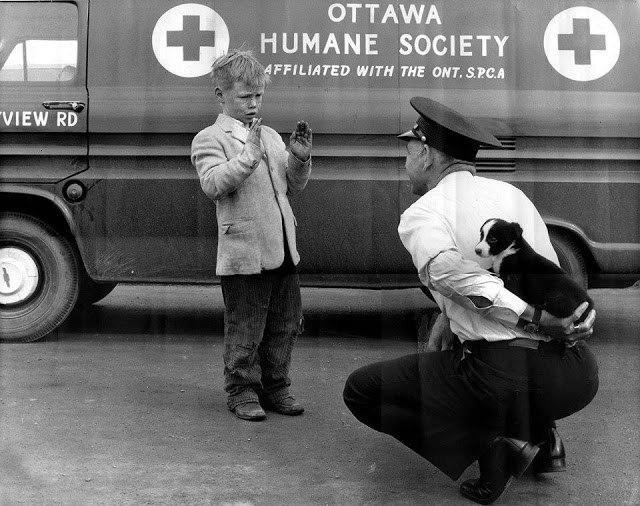 Хочу маленького щеночка. Канада, 1950-е. (640x506, 84Kb)