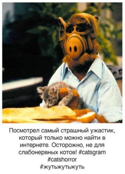 Если бы у кошек был Instagram, то он бы выглядел так