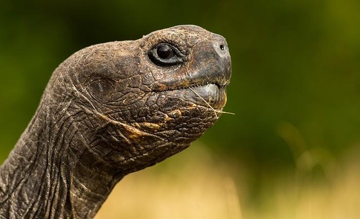 Фотографии-победители конкурса Galapagos Conservation Trust Photography Competition