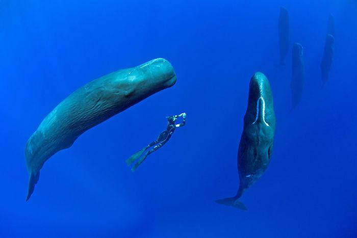 фото спящих китов 1 (700x467, 85Kb)