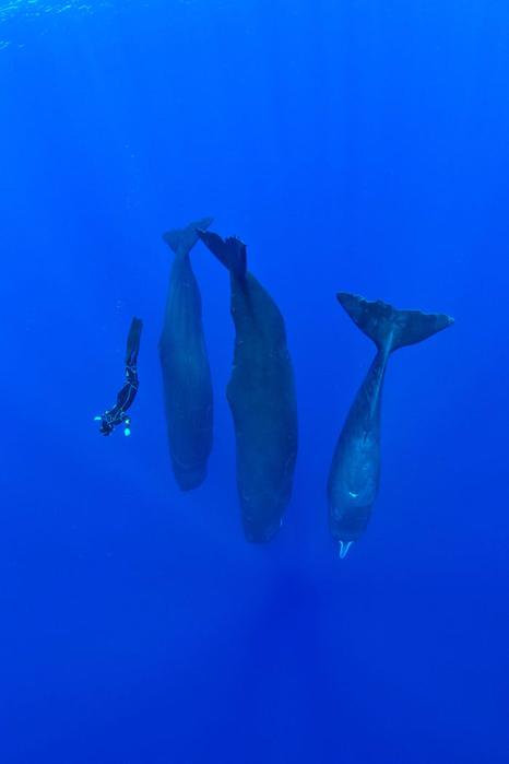 фото спящих китов 3 (466x700, 133Kb)