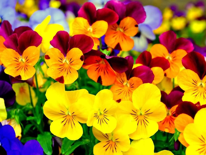 Beautiful-Yellow-And-Red-Flower-Image (700x525, 426Kb)