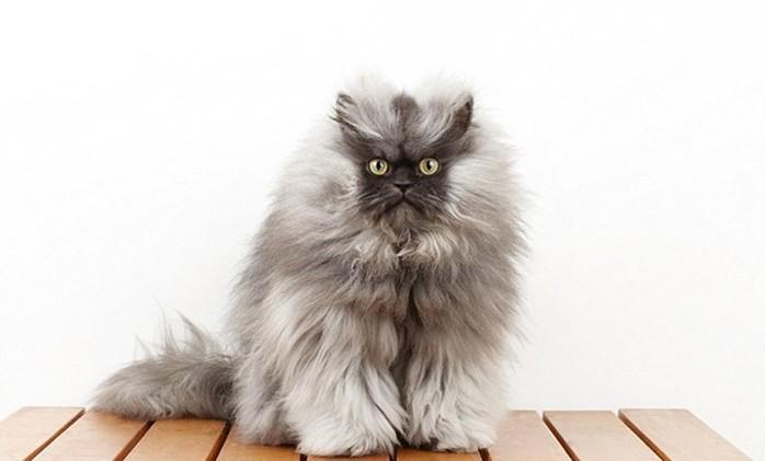 Самые популярные коты мира