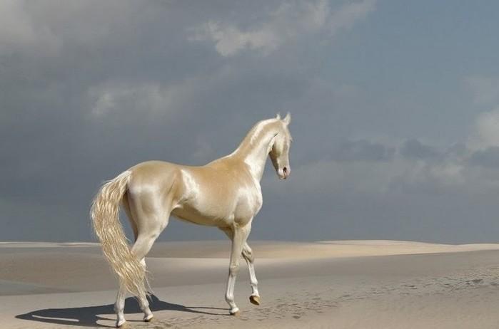 Самые дорогие домашние любимцы: от арабской лошади до рыбки дракона аравана