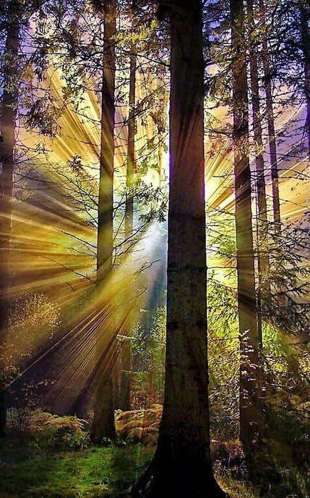 деревья лучи (435x700, 171Kb)