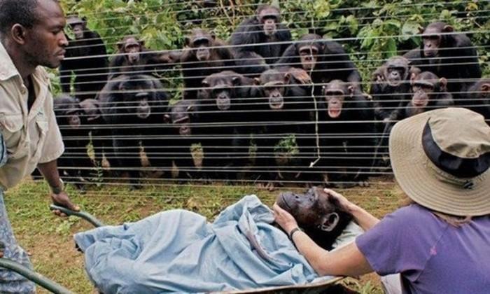 Интересные доказательства, что животные намного умнее, чем мы думаем