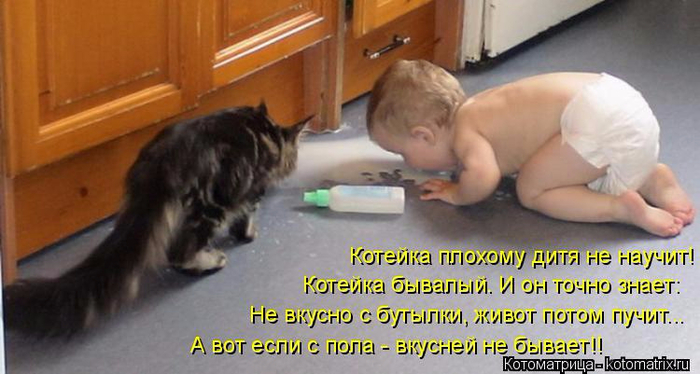 kotomatritsa_H (700x374, 273Kb)