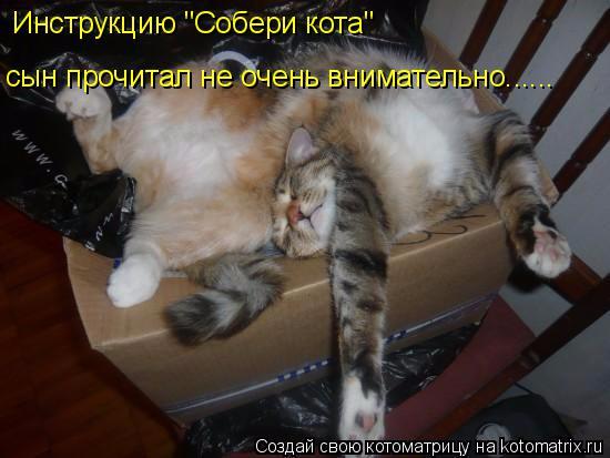 kotomatritsa_l_ (550x413, 186Kb)