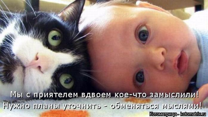 kotomatritsa_Md (700x392, 262Kb)
