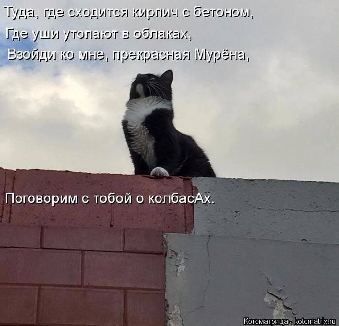 kotomatritsa_S (700x672, 289Kb)