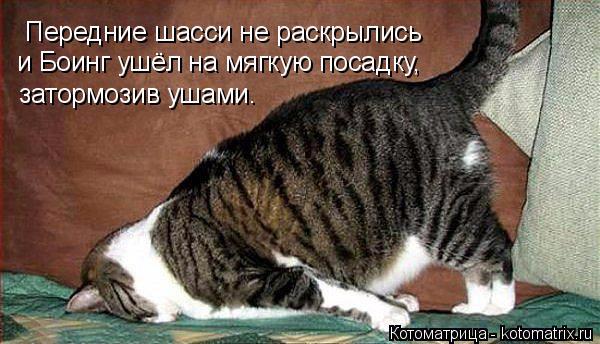 kotomatritsa_x (600x344, 220Kb)