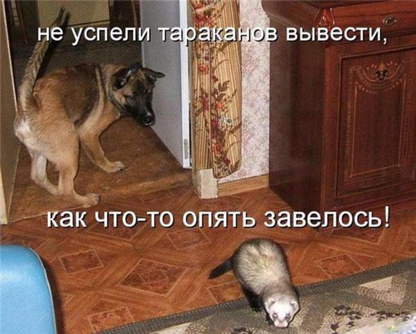 1254672933-zabavnye-zverushki-s-podpisjami-43-foto_AddFun.ru_6 (600x482, 258Kb)