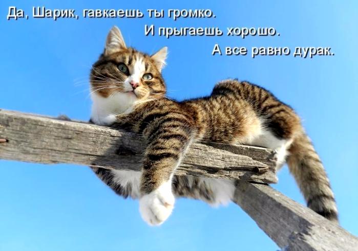 prikoli_pro_kotov_i_kotjat (700x491, 308Kb)