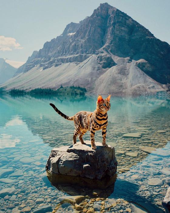 путешествующая кошка 6 (560x700, 517Kb)