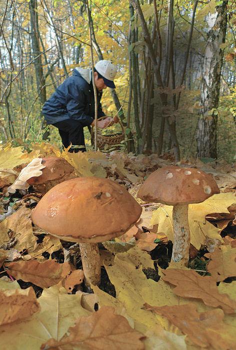 Осень пора грибников. Советы чайникам