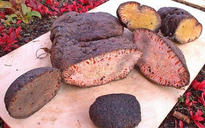 Копальхен — опасный деликатес, который могут есть только коренные жители Севера