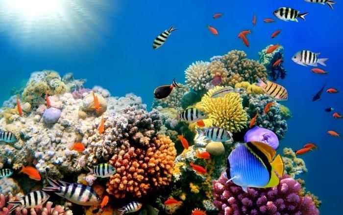 Что такое коралл? Камень, растение, животное или...