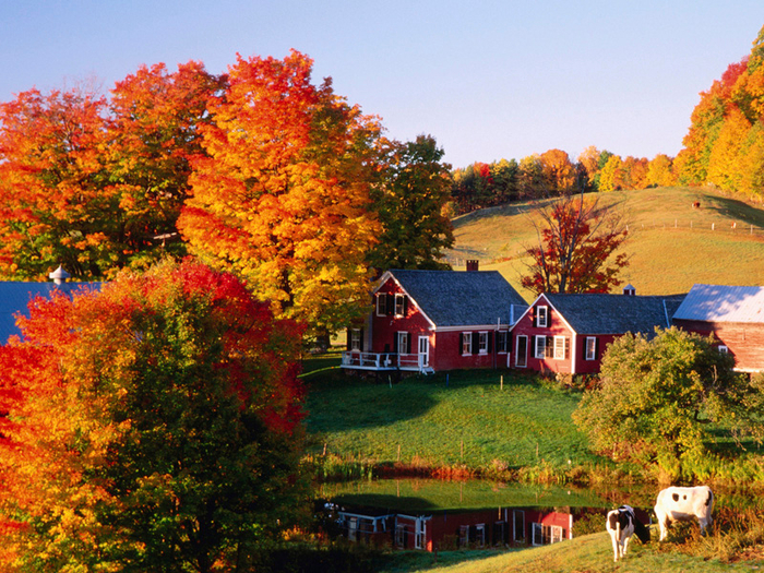 Jennes_Farm_in_Autumn_Vermont (700x525, 646Kb)